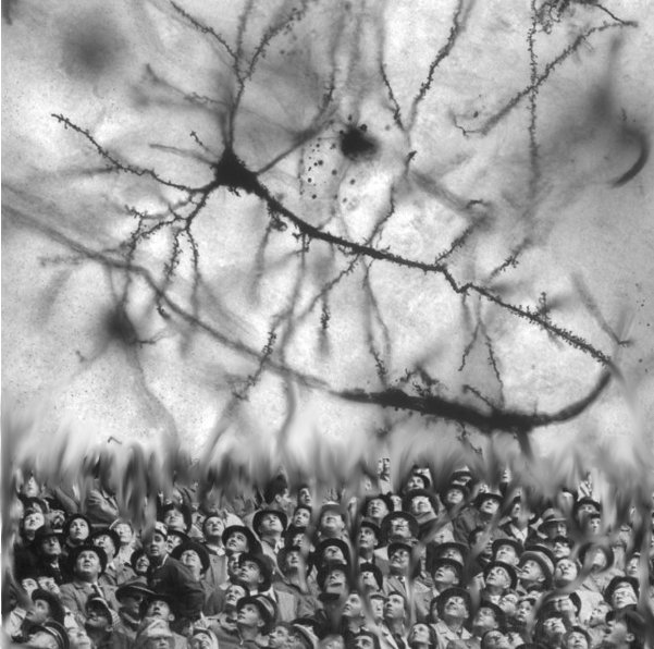 Pyramial_hippocampal_neuron